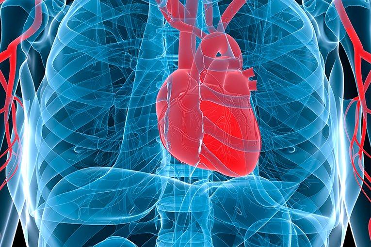 O seu coração